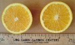 Washington Navel Orange  tree - 7 Gallon - GRAFTED