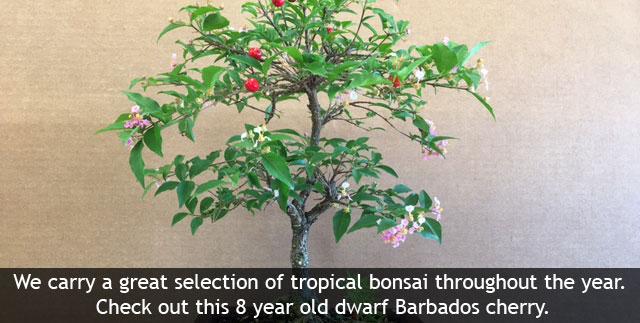Buy Tropical Fruit | Flowering Trees | Exotic Plants Online