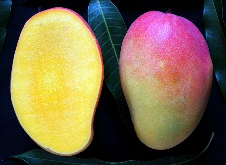 Rosigold Mango - GRAFTED