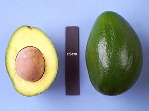 Choquette Avocado - 3 Gallon - GRAFTED